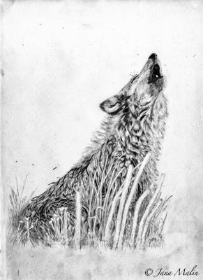 Zeichnung_wolf_jana_Malin